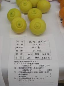 Haruka Citrus
