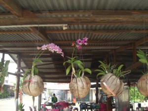 Coconuts bear orchids