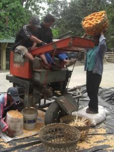 02Grinding corn