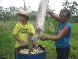 (1) Put corncobs in the drum.