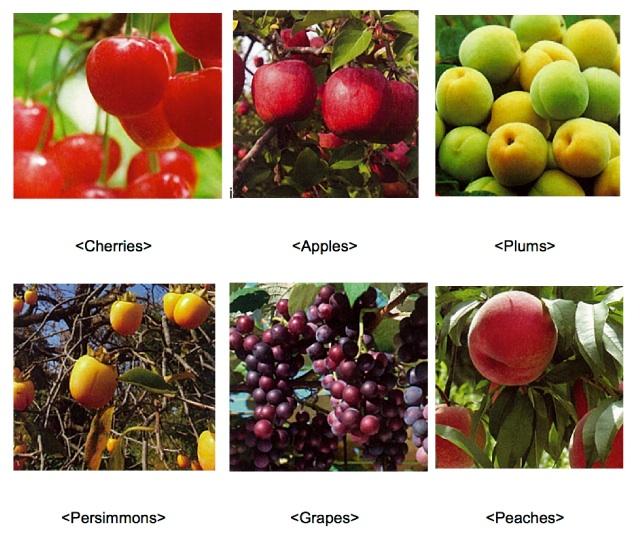 fruitspanel
