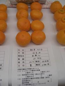 Harumi Orange